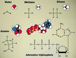 organic molecules contain